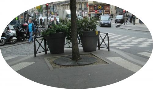 Pied d'arbre rue La FAyette.jpg