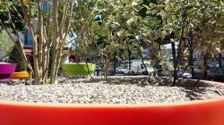 paris,18e,promenade-urbaine,placette-aplat-charbonnière,végétalisation,espace-public,rassemblement,propreté