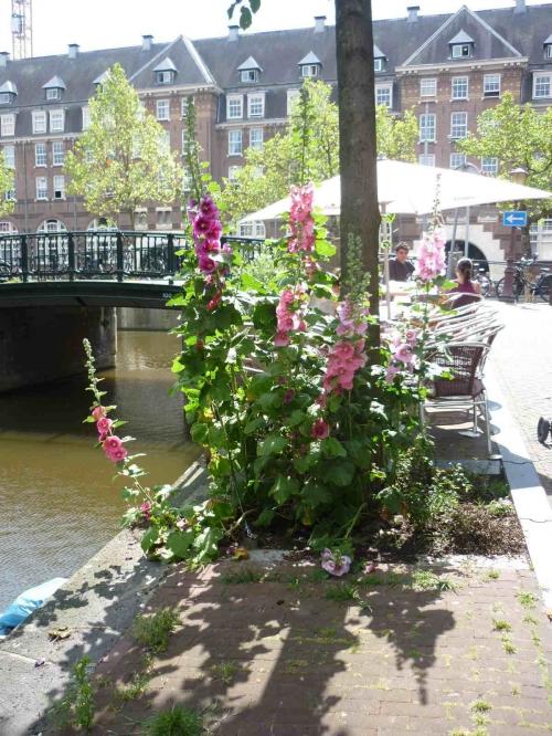 paris,Amsterdam,pied-d-arbre