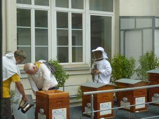 paris,9e,grdf,condorcet,miel,riche,apiculteur,laurent-chabas,éducation,écologie