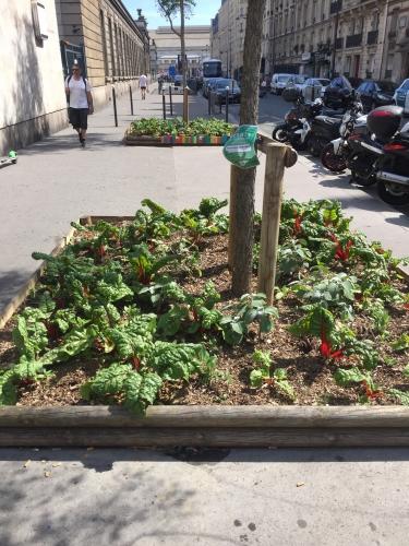 vegetalisation,jardin,square,9e,10e,18e