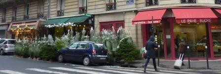 PHOTOS - sapins du faubourg web.JPG