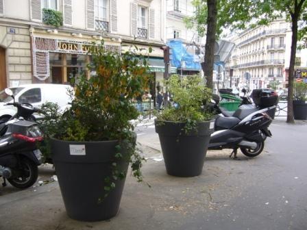 paris,voirie,paré-patin,magenta,plantation,végétalisation