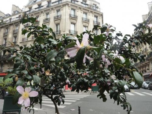 paris,plantes,rue-Gérando,rue-de-Dunkerque