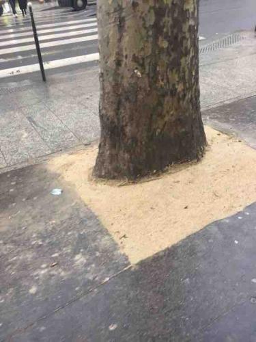 paris,18e,bd-Babrès,arbre,pied-d-arbre