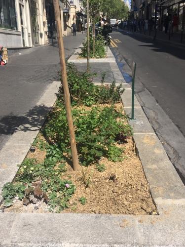 rue-manuel,9e,végétalisation