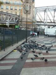 paris,pigeons,jessaint