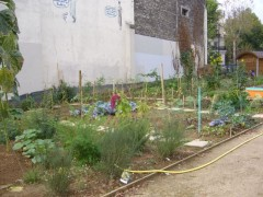 Square St-Laurent potager.jpg