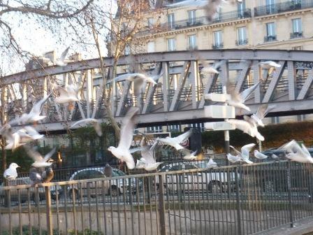 paris,18e,square-jessaint,pigeons,mouettes,nourrissage