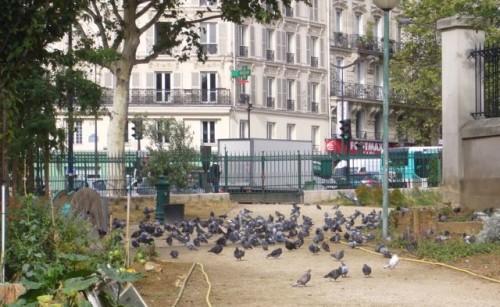 paris,square-saint-laurent,pigeons,hygiène