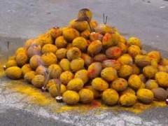 photos --- noix de coco .jpg
