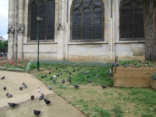 square saint laurent, pigeons, 10ème