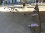 paris, barbès, pigeons, ratp, propreté, métro