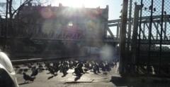 paris,18e,square-jessaint,pigeons,rats,dératisation,salubrité-publique
