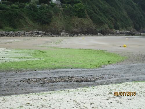 bretagne, algue verte, douarnenez, plage