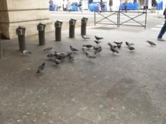 P1000960 pigeons et pains web.JPG